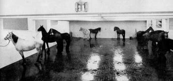 1969 Jannis Kounellis, Cavalli, Galleria L'Attico, Roma.jpg